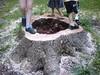 tree_ritual