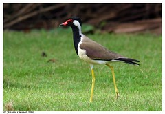 gentle..as a bird (Naseer Ommer) Tags: india birds fauna canon kerala av