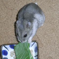 青梗菜を食べるコーキ