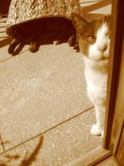 LUIZA & CLARA (CABILUDAS!) Tags: cats cat chats kitten chat gatos gato gata felinos felino gatinhos felin gatas gatinhas