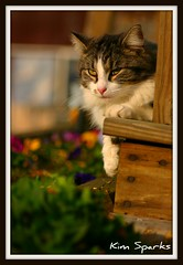 Whiskers (emtbkim) Tags: flowers pet pets sun color cute nature animals cat garden landscape spring day bestofcats fotocompetition fotocompetitionbronze