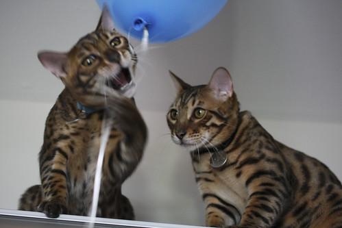 helium cats