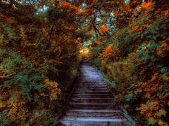 high park (paul bica) Tags: pictures trees toronto hot color colour art colors beautiful beauty stairs digital photoshop outdoors photography photo yahoo google amazing graphics pix exposure flickr highpark colours image photos pages pics top steps picture pic images best collection photograph clipart thumb sensational thumbnails msn leafs flikr brilliant flick dex flicker screensavers tistheseason colorphotoaward dexxus inspiredbyyourbeauty sailsevenseas
