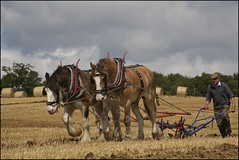 Northchapel..17 Aug 2008 (strussler) Tags: england horses canon eos village westsussex rally sigma apo steam 5d heavy dg clydesdale ploughing 70300 cs3 northchapel impressedbeauty adobelightroom2