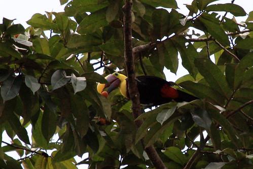Costa Rica - Día 3 (188)