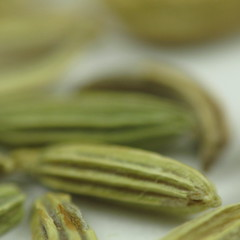 Fennel (kevin dooley) Tags: china italy food fish eye yellow fruit turkey season de recipe gold golden mediterranean flavor five breath spice chinese egypt cook seed meeting curry best goods explore liquor vision help aid chef sausages chew strength dried provence fennel increase seasoning afterdinner perennial baked ripe mirepoix blend eyesight ingredient digestion scandanavia herbes vulgare foeniculum intensify freshenser