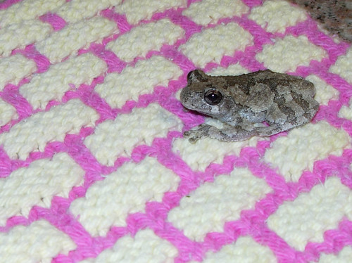 Froggy visitor on dishcloth