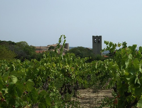 Views of Vineyards in the South of France
