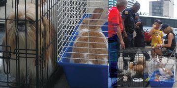 Kinship Circle - 2008-09-10 - Animal Evacuations In A Post-Katrina World 06
