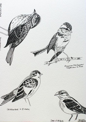 Birds Sept/Aug