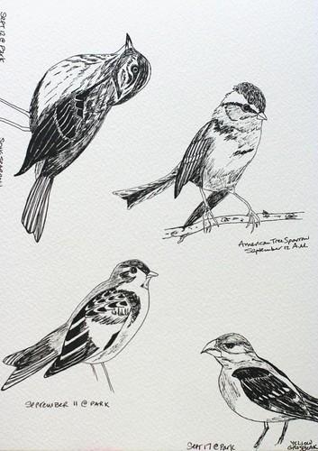 Birds Sept/Aug