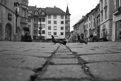 """on the road..."" (Gaston.ch) Tags: street bw nikon  schaffhausen sw morgen tauben strassen golddragon d40x gastonch"