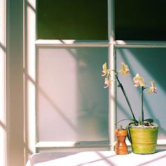 light (leslie*thomson) Tags: light orchid sigma30mmf14 innonthetwentyrestaurant