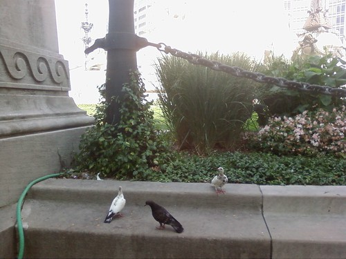 pigeons in Monument Circle