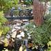 Botanical Gardens and Zoo 063
