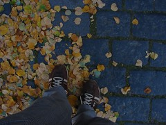 my diesels + fall leaves + cobblestone = joy 1