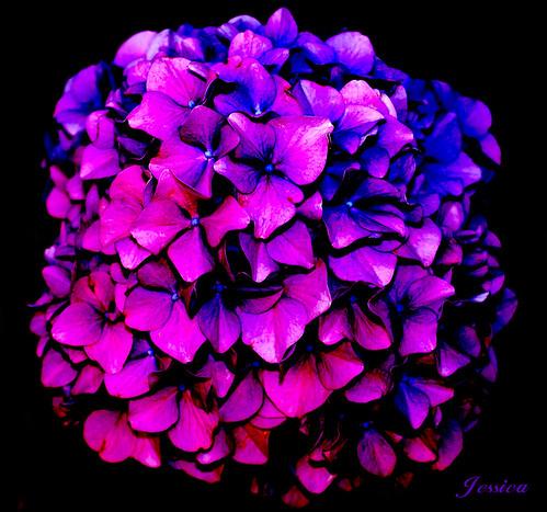 La flor de Jess