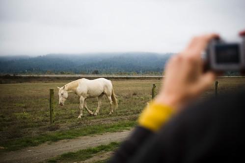 """The """"Lightning"""" Horse"""