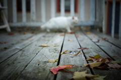 (docksidepress) Tags: autumn building fall home leaves backyard nikon michigan deck grandrapids sigma30mmf14exdchsm d40 sneekers neighborscat turningcolors