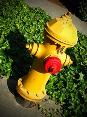 RED MOUTH (Photocoyote) Tags: seattle urban usa hydrant washington honeymoon pacificnorthwest capitolhill theemeraldcity canonpowershota720is cronacheurbane