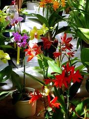 Nature's Colour Mart (orchids expo) (Fernanda Dobbin (on/off)) Tags: friends plant orchid flower planta nature