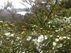 Spring in Tasmania