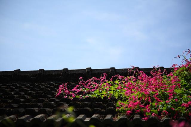 屋根上の色彩