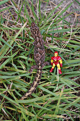 THE INCREDIBLE SHRINKING IRON MAN - LEAPING LIZARDS !! (zero g) Tags: australia melbourne ironman victoria lizard plastic superhero greatshot robjan sciencefiction gecko flickrcentral marvel eclectic marvelcomics collectibles floraandfauna avengers whimsical tonystark avenger fantasticplastic thesecretlifeoftoys fourcolorworld theflickys plasticfigures thetoyshoppe naturearoundyourhouse anythingeverything scificatchall flickrnature lifeinplastic toystoystoys strangecouples islandoflosttoys toysaholicanonymous reallyunlimited forthetotallyobsessiveflickrites flickrzoo stuffstuffstuff ihearttoys comicbooktoys australianflickr{2picturesaday} australia2007daybydayonephotoaday 6packphotos allsizesavailable marbledgecko christinusmarmoratus peopleormannequinsdollsandmore stuffthatlookslikestufffromsciencefictionmovies plastic52 shellhead freakgeek hulkandnightcrawler takenwithpentaxk100dseries ironman50thanniversary ironman50thbirthday