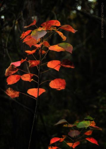 Baby fire tree