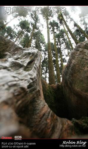 你拍攝的 20081116數位攝影_阿里山之旅188.jpg。