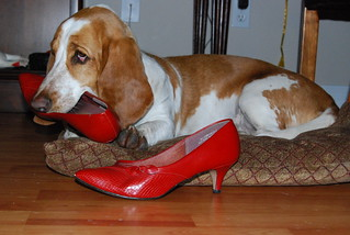 Hush Puppy  eat shoes!!!