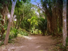 Jungle At Chacchoben (Butch Osborne) Tags: travel mexico amazing interesting ancient ruins maya awesome scenic culture mayan mayanruins historical traveling antiquity mustsee mayanculture yuccatan westerncarribeancruise2006 mayancity bucketlist