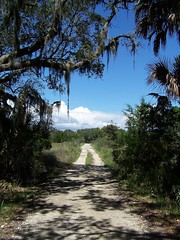 Botany Bay Plantation: Causeway (greenkayak73) Tags: ocean shells beach wildlife southcarolina erosion hollywood movies preserve shrimpboat edistoisland seaisland maritimeforest filminglocations palmettotrees lowcountryunfiltered botanybayplantation