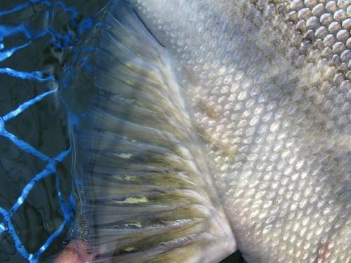 Jay Nicholas Salmon Seminar: SeaLice