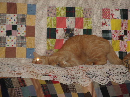 cat attains enlightenment #2