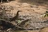 Animais de estimação (Luiz C. Salama) Tags: animais animal fauna amazonia bichos liberdade manaus amazonas brazil brasil canon luiz salama drocio ocioso luizsalama salamaluiz metareplyrecover2allsearchprigoogleover