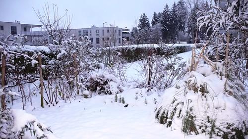 Snow in the garden 2008