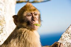 Little Monkey Do by Justin Korn