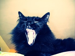That girl's a trick. (Owl Eyes*) Tags: blackcat yawn thisprovidence