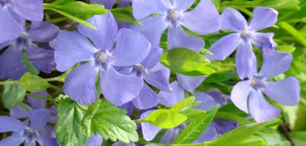 pavasaris5