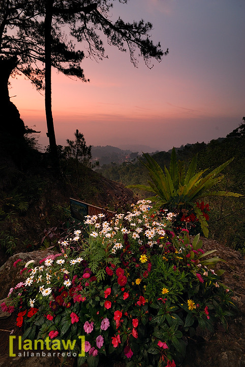 Flower Patch in Sunrise