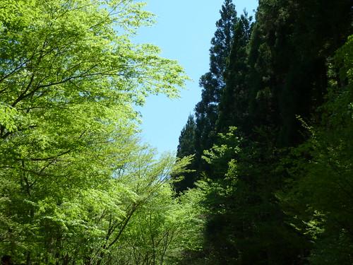 エコピアの森 針葉樹と広葉樹