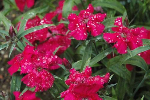 garden in may 005
