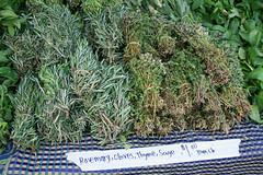 medicinal uses for sage herbs