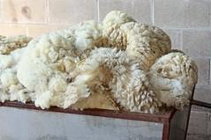 Tub of wool