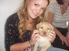 25. Alfie :) (sarah.louise11) Tags: new family dog pet baby cute puppy puppies labrador sweet young adorable retriever litter tiny arrival