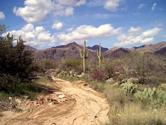 Desert Wash (ScenicSW) Tags: arizona southwest desert tucson journey virtual monsoon paths sonorandesert arroyo cloudscapes catalinas smrgsbord tucsonarizona desertsouthwest gamewinner desertscape a aridregion desertwash desertsetting 15challengeswinner desertbeauty scenicsw virtualjourney herowinner pathortrail
