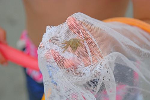 Baby Crabbie