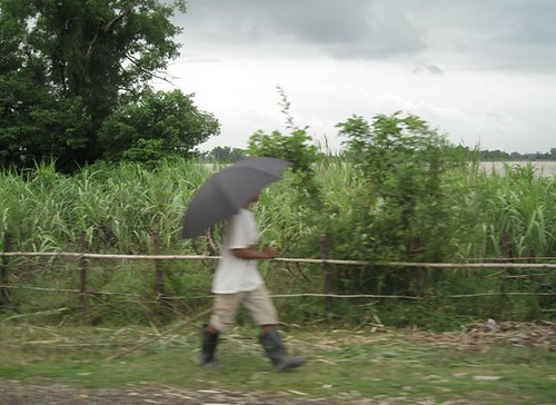 walkingby sugarcane fields