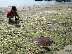 Stranded Jellyfish (Ada / dirtyolive) Tags: labourday sidneyspit september2008